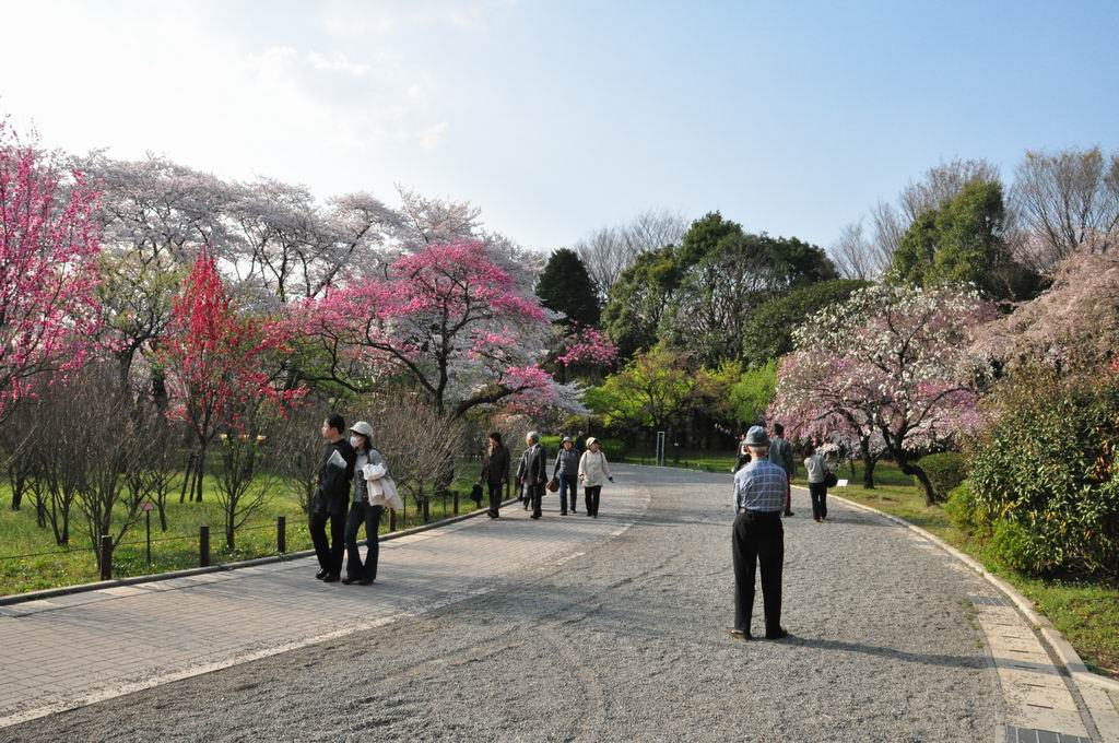 chofu-jindaiji-botanical-garden-39-colors